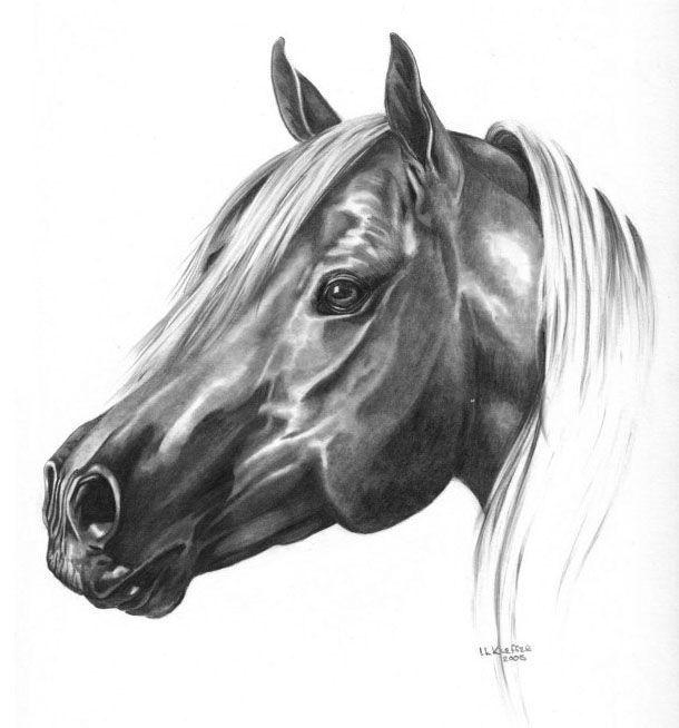 Noir et blanc animaux - Dessin chevaux noir et blanc ...